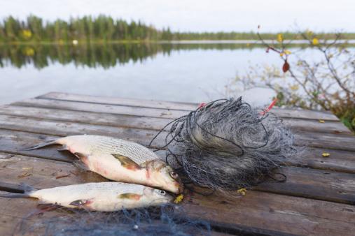 2019 Whitefish Netting