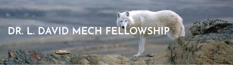 International Wolf Center Undergraduate Research Fellowship Opportunity